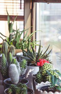 Plantas diferentes